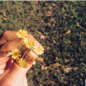 tiny flowers to brighten your afternoon